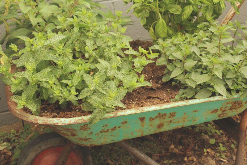 Just Make Stuff Blog...Herb Garden