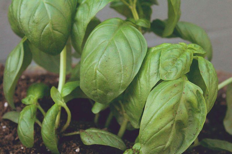Just Make Stuff Blog...Wheelbarrow Herb Garden