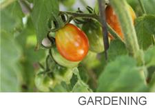Gardening copy